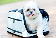 Dog Product Reviews / by Pretty Fluffy
