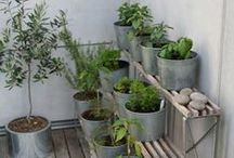 Garden - container / by Kathi OakHillHomestead