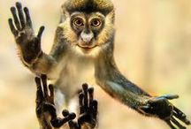 Monkey Business / monkeys! / by Lynn Blasey