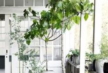 Home, Garden, Decoration/Domov, zahrada, dekorace