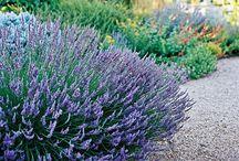 Pretty Pots & Gardens