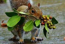 Squirrel! / by Lynn Blasey