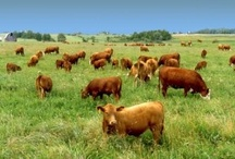 Farm Life / Farmers, Farm Animals, Barns, Sheds, Scenic Pastures, Fields/Crops, Anything and Everything Related to Farming (Including Tractors)