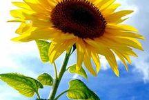 plant: flower