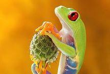 animal: reptile, amphibian