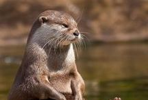 animal: aquaticAnimal