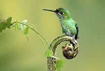 animal: bird