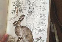 Nature journals
