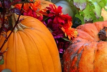 Fall / by Michele Davis Wood