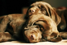 •●●WѺѺƒs & WaGs●●• / Woofs & Wags.... Dogs and Puppies.....