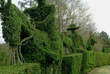 Topiaries / by Ruth Crawford