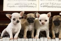 "Soothes the Savage Beast / You know the old saying ""Music soothes the savage beast""? These are some of our favorite pics of our animal friends enjoying the sweetness of music! / by TakeLessons"
