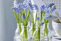 Blooming in  Vase / by Nanny Nee