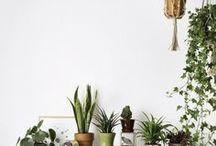 indoor plants / pflanzen