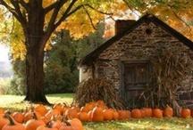 Happy Fall Y'all / by Lauren Hardee