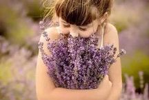 {love love lavender} / by Michele Weltz
