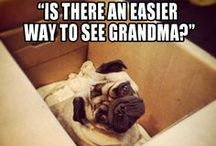 Pug Funnies / The greatest pleasure of a dog is that you may make a fool of yourself with him and not only will he not scold you, but he will make a fool of himself too."