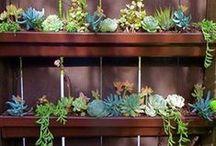 Horticulture. / Gardens, plants & excellent succulents.