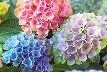 Flowers! / by Tricia Mrkich