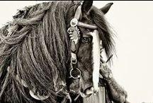 Equus / by Stacey Van Veen