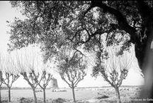 Aixerrota / by Getxo iruditan - Imágenes de Getxo