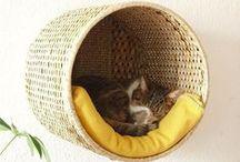 Confort pour chat