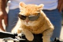 Meow! Meow! Meow!  / by Elizabeth Weeks