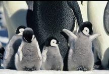 Penguins! / by Jennifer Long