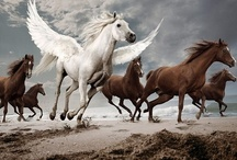 Horses / by Pic War