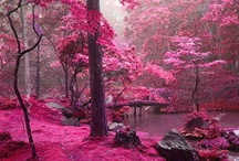 Pink landscapes / For Rita Pink :