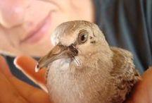 aves S2