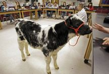 Ag Teaching & More / Ag Science. FFA. Teaching. / by Mindy Camp (Young)