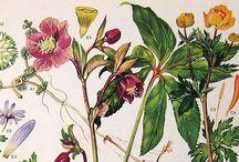 Botanical Illustrations / by Amanda Phillips