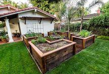 Garden / by Trisha Bryant-Clark