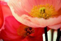 garden life / by Moonandlion Tijeritayplasticola