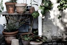 Outdoor/garden / by Hildur Blad