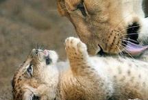 Cute cute cute / cute cute cute