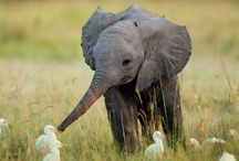 cute animals / by Cortnee Markowski