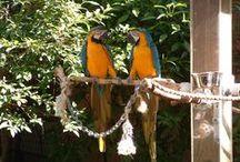 Jungle Gardens / Sarasota FL / by Elizabeth Talley