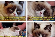 Tardar Sauce :) / This is a board that is just for Tardar Sauce AKA Grumpy Cat / by Anna Young