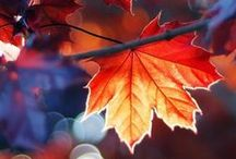 Autumn / by Julia Isslamow