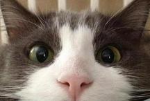 .:: Furry Friends ::.