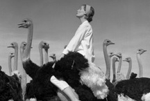 QuiTe a FaShionaL BiRd!ོ / Fashion, black and white, 1940's 1950's 1960's