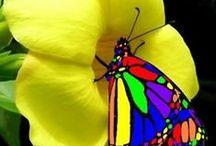 aves y mariposas
