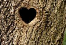 Tree! / by Joli Campbell