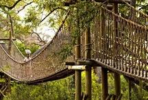 Swinging Bridges / by Kathy Wallace