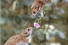 Amor animal / Animals love / Preciosas y tiernas fotos del #amor que se prodigan los #animales.  Nosotros somos unos grandes #enamorados de ellos :)