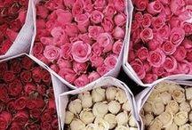 Lenguaje de las flores. / Language of the flowers