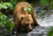 Animals. Bears. / All types of bears.