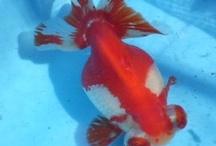 Freshwater fish.etc. / by Hiromi Sumida Sumida